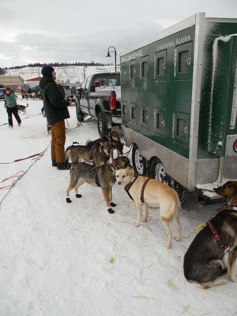 The Start Photos And A Quick Update Dew Claw Kennel Snow Dog Hd Wiring Harness Dogs Getting Harnessed Ready We Use Manmat Harnesses For Our Team